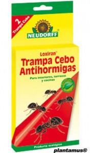 Como eliminar hormigas