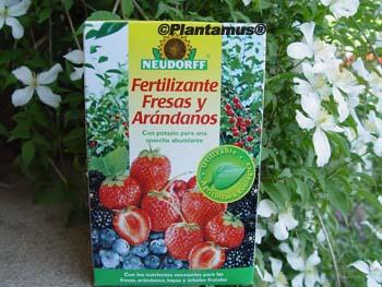 abono fresas