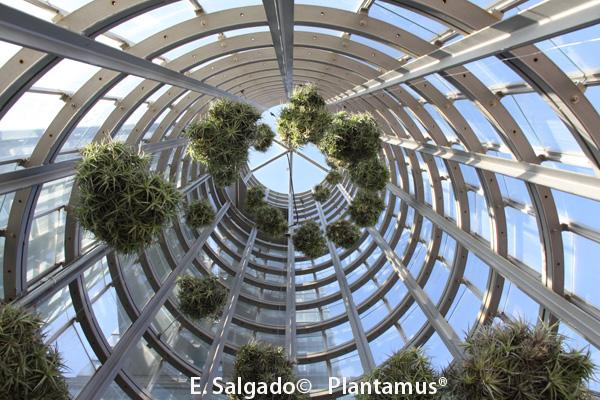 Viforsa, S.L. Plantamus® en la Ciudad de la Cultura