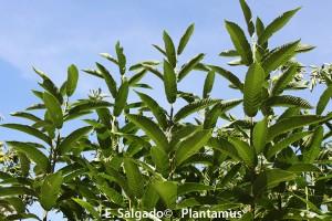 MAS ÁRBOLES !!! La Campaña de Plantamus para fomentar la plantación de árboles.