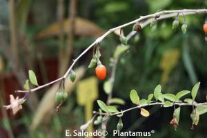¡¡¡ Sorteo De Frutos del Bosque !!!
