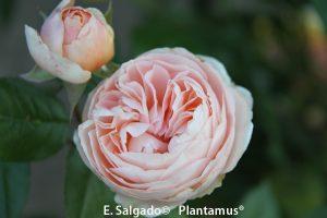rosal-natascha-richardson