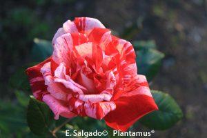 rosal-rachel-louise-moran