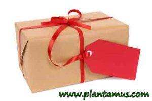 plantas-regalo