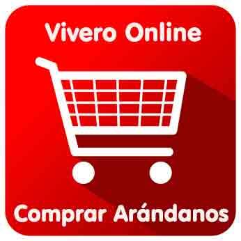 Comprar plantas de arándanos Online