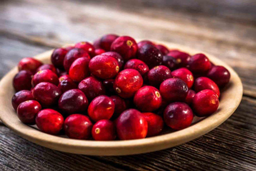 arandanos rojos planta
