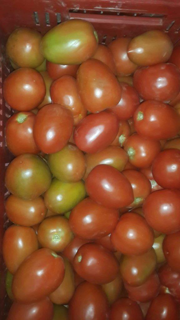Para desarrollo de frutos abono para tomates