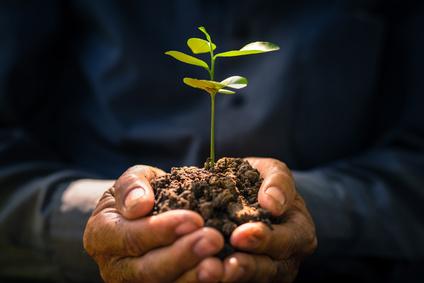 Tipos de plantas: Cómo identificarlas de forma fácil y rápida.