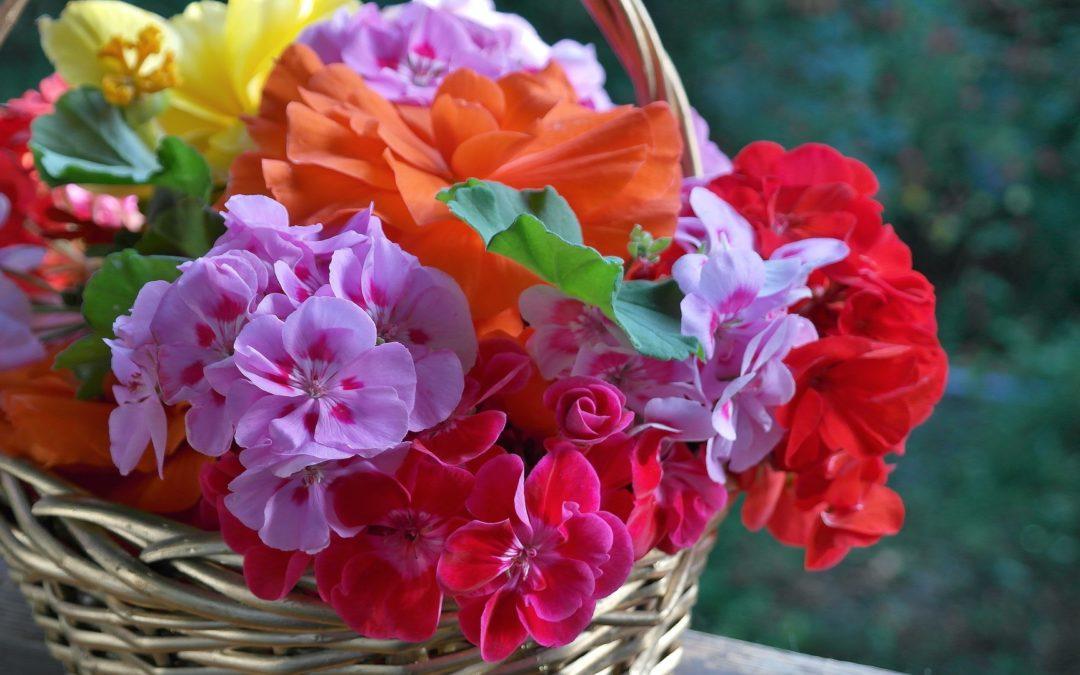 Tu tienda de jardiner a online archivos plantamus Jardineria online