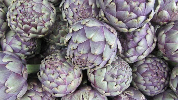 calendario de siembra de hortalizas con alcachofas