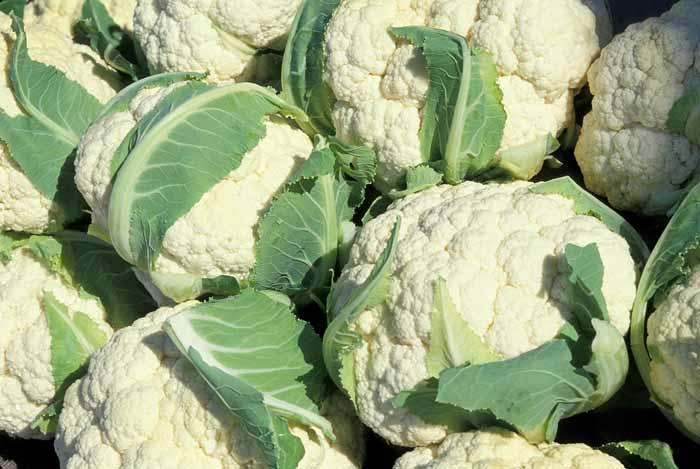 el coliflor en el Calendario de siembra de hortalizas