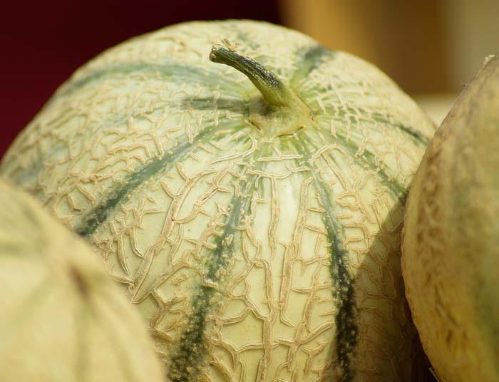 el melón en el calendario de siembra de hortalizas