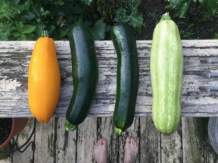 sembrar en Agosto para cosechar