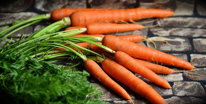sembrar en Agosto zanahorias