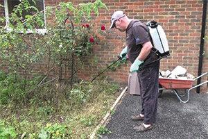 Aplicación de Sulfato de cobre en nuestro huerto