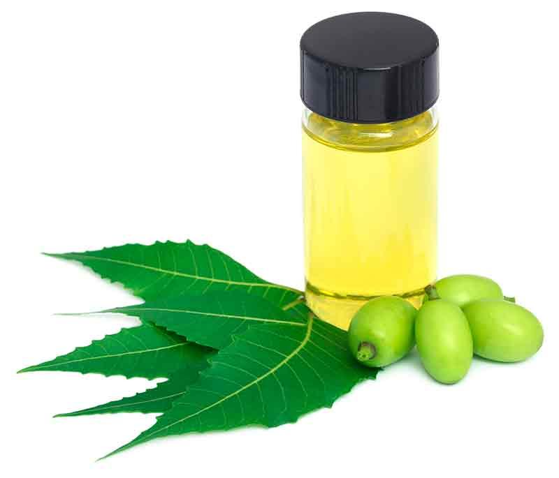 aceite de neem arbol