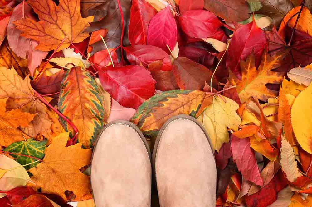 arboles en otoño arces rojos