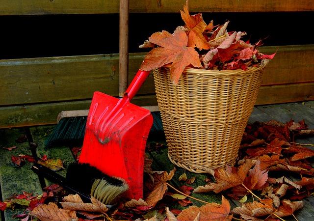 Cultivos de otoño y labores a realizar en nuestro huerto