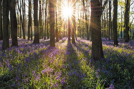 El huerto en primavera. Condiciones ambientales