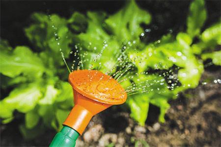 Labores de mantenimiento para cultivos de verano