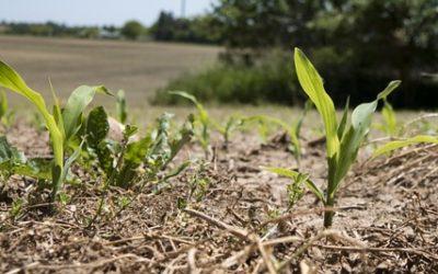 ¿Que cultivos de verano podemos tener en nuestro huerto y cuales son sus labores?
