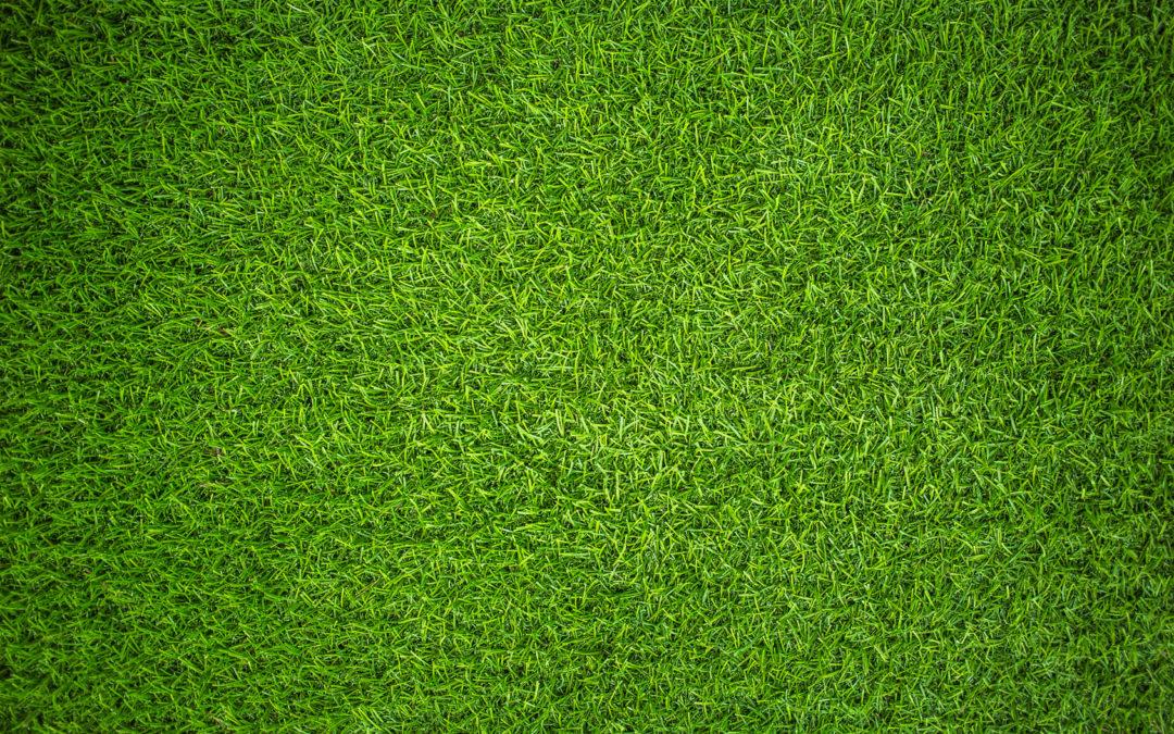 Cómo sembrar grama u otros céspedes y tener éxito.