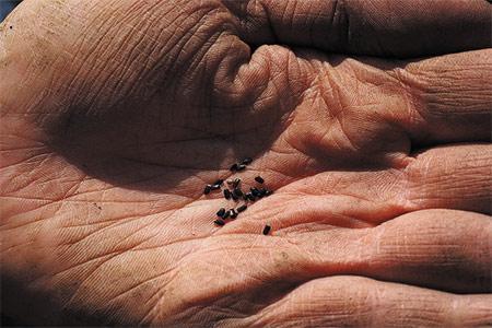 la siembra de cultivos de verano