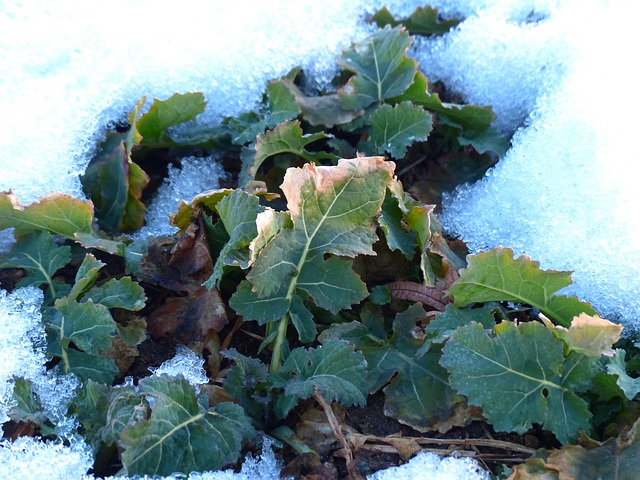 Cultivos de Invierno, ¿Que tareas realizar en tu huerto en esta estación?