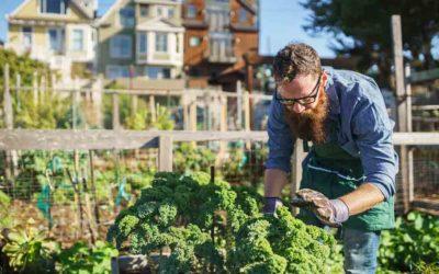 Inicio blog de jardineria y huerta plantamus tu vivero for Jardineria online