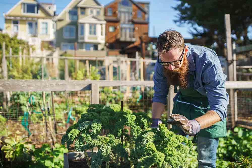 Como suscribirte al Blog de jardinería de Plantamus®