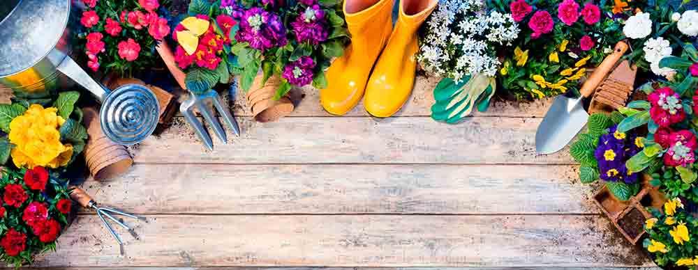 huerto blog jardineria