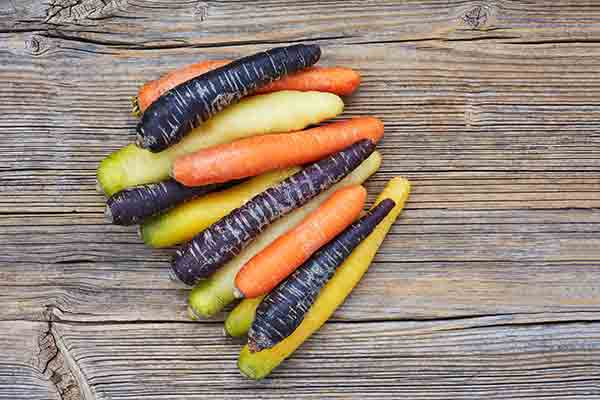 zanahoria morada semillas